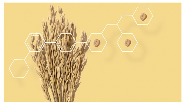 oats-tout-image.jpg